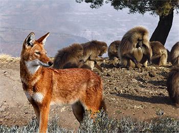 Uomini, lupi e addestratori cinofili