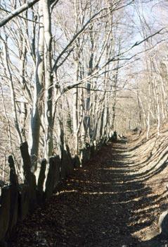 alla scoperta di sentieri nella natura e di antiche vestigia celtiche