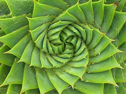 Risultati immagini per l'eccezionale intelligenza della Natura