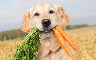 Un ricettario vegan per i cani