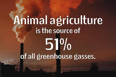 Le emissioni del gas serra degli animali