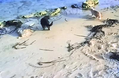 I gatti di Su Pallosu in spiaggia
