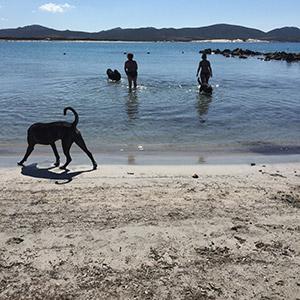 I cani e i loro amici umani si dovertono insieme al mare