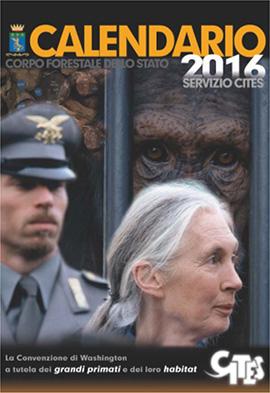 Il Calendario 2016 del Servizio CITES del Corpo Forestale dello Stato, quest'anno interamente dedicato alle Grandi Scimmie e all'impegno del Jane Goodall Institute
