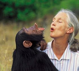 Jane Goodall, etologa, primatologa e scienziata, ha dedicato la sua vita allo studio e alla protezione delle grandi scimmie