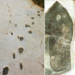 """Le impronte di sauro accanto a quelle umane rinvenute nel letto del fiume Paluxy River di Glen Rose nella zona del """"Dinosaur Valley State Park"""" in Texas, USA. Le impronte umane sembravano indossare calzature rigide e piatte"""