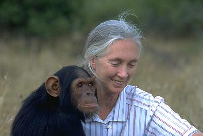Jane Goodall, l'antropologa inglese che ha dedicato la sua vita a salvare gli scimpanzé