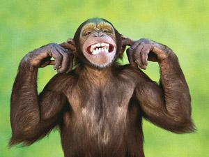 """""""il sorriso degli scimpanzé spesso mostrato negli spot o nelle trasmissioni televisive in realtà è un'espressione di paura""""…"""