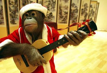 La triste immagine di uno scimpanzé costretto ad esibirsi in abiti e pose umilianti