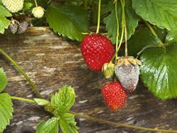 Omeopatia anche per le piante