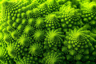 Broccolo romanesco