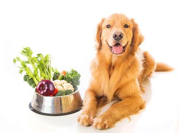 Verso una alimentazione vegetale anche per i nostri amici cani
