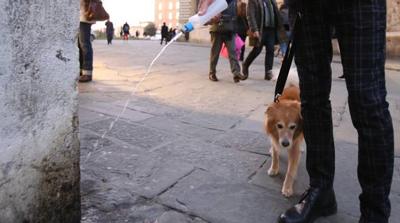 La pipì del cane sul muro del palazzo