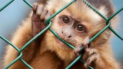 Vivisezione, sperimentazione animale… qual è la differenza?