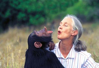 Jane Goodall, etologa, famosa per i suoi studi e la tutela delle grandi scimmie