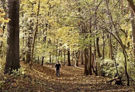 Per combattere i virus – in base a un'antica credenza giapponese – basterebbe una lunga passeggiata nel bosco