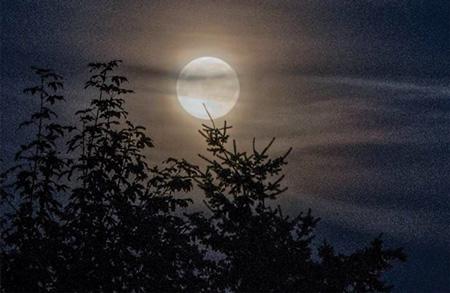 Secondo le credenze popolari, la luna influenza le piante e i raccolti