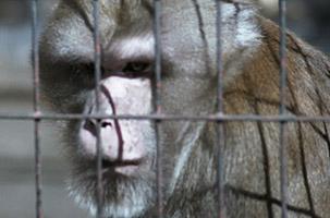 Torino non merita uno Zoo